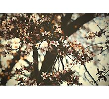 Spring daze... Photographic Print