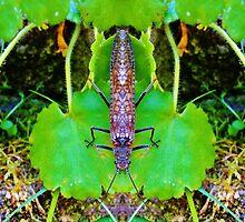 Bug 50 by MattAtTheWorld