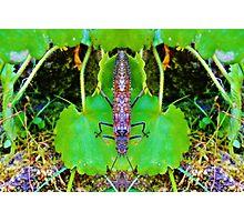 Bug 50 Photographic Print