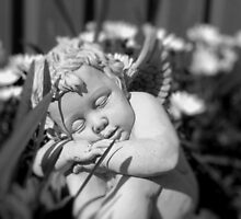 Angel In My Garden  - Black and White  by danita clark