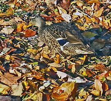Duck amougst the leaves by nadiasawaged