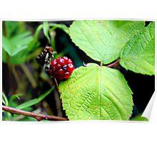 The last blackberry Poster