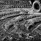 Clear As Mud. by Alex Preiss