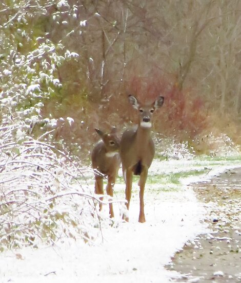 Baby's First Snowfall by lorilee