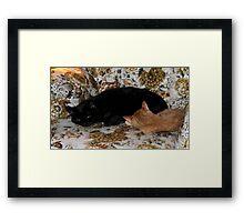 It's Midnight & Sunny  Framed Print