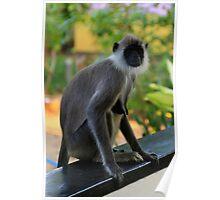 Sri Lankan Cheeky Monkey Poster