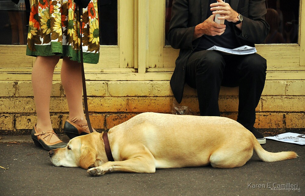 Dog Tired by Karen E Camilleri