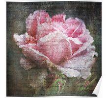 Vintage Old English Rose Poster