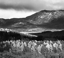 Pitlochry - Tapestry of Light and B&W by Kevin Skinner