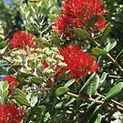 Pohutukawa flowers iPhone case by Heather Thorsen