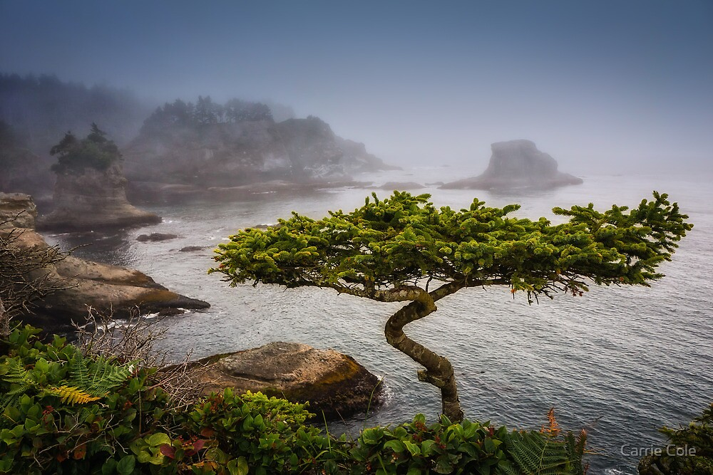 Bonsai by Carrie Cole