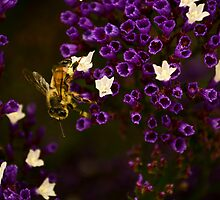 Pollinating  by mayolover