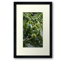 Conkers Framed Print