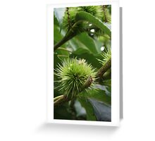 Close up of Conkers Greeting Card