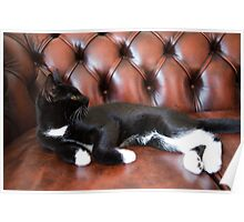 Kaspar relaxes on his Chesterfield sofa Poster