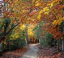 Walking in the Leaves by Eileen McVey
