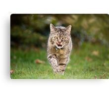 Holly does the catwalk thing Canvas Print