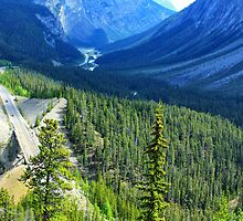 Icefields Parkway by Charles Kosina
