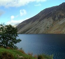 Tree at Wast Water by GeorgeOne