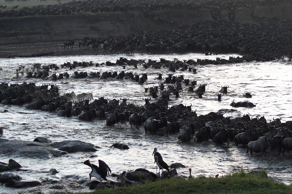 Wildebeest crossing the Mara by Braedene