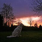 Ditte and a November sunrise by Trine