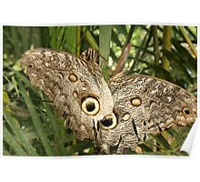 Two Butterflies on a Plant Poster