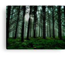 It'sA Green World ~ Fir Trees ~ Canvas Print