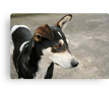 Black Brown and White Dog Canvas Print