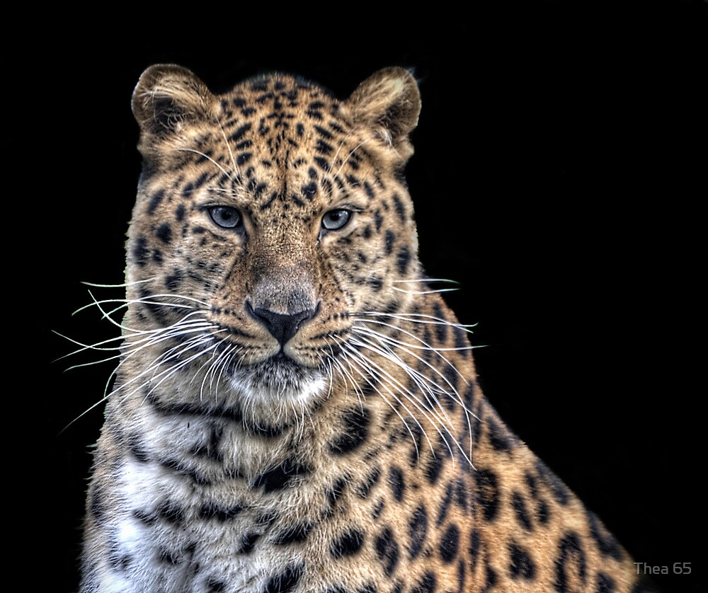 Spotted beauty by Thea 65