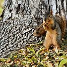 Fuzzy Squirrel by Keala
