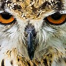 i've only got eyes for you by Anton Alberts