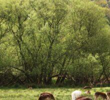 Deer at Bolderwood Sticker