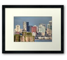 Sound Seagull Framed Print