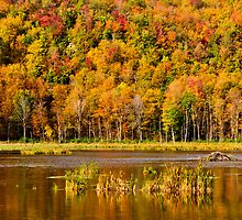 Autumn colors by Mike Bachman