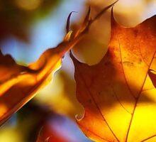 Autumn sun Sticker