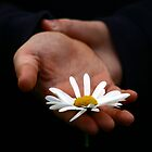 Daisy for you by Annie Japaud