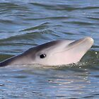 baby dolphin by Kay Reynolds