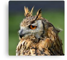 Wise one....... Canvas Print