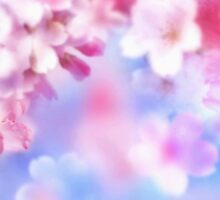 Cherry Blossoms by nvrdi