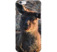 Western grey kangaroo (Macropus fuliginosus) - Kangaroo Island iPhone Case/Skin