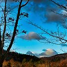 The view from my front porch by Penny Rinker