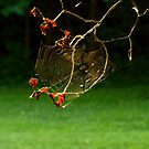 Webbed by WildThingPhotos