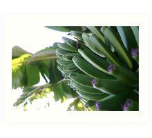 Bananas of Gran Canaria Art Print