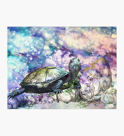 TURTLE Photographic Print