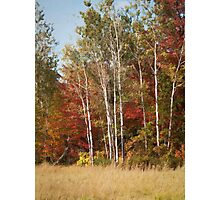 Painted Fall Colors Photographic Print