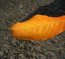 Sunlit Russet Leaf by BlueMoonRose