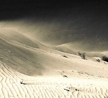 Drifting Dune (duotone) by graphicscapes
