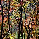 Autumn Colors by David Schroeder