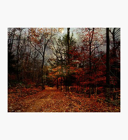 Seasonal Autumn Road Photographic Print