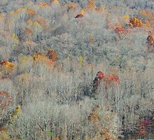 Fall Color in the Mountains by Bill Shuman